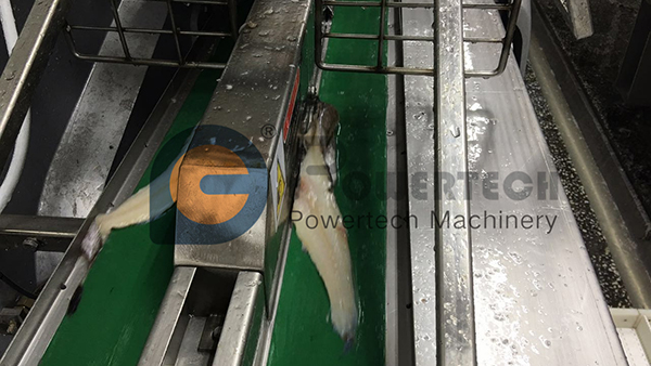High Capacity Automatic Fish Filleting Machine